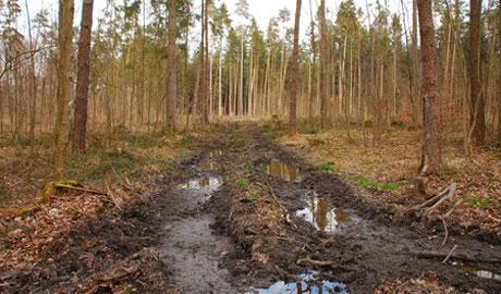 Waldwirtschaft: Neue fahrbare Untersätze