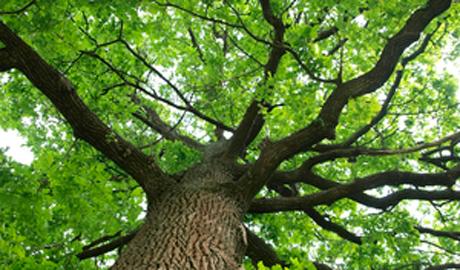 Inventur in Grünen – So sieht es den deutschen Wäldern aus