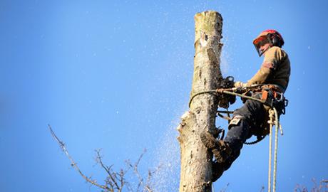 Neues aus dem Hause Stihl: Baumpflegesäge MS 201 TC-M