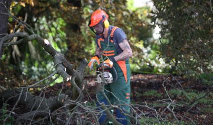 Michael Hess: Vom Waldarbeiter zum Baumschnitzer