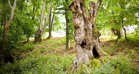 Amrum: Eine Woche Urlaub als Gegenleistung für eine Holzskulptur