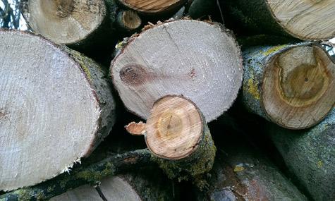 """""""Wenn's nix wird, wird's Brennholz"""""""